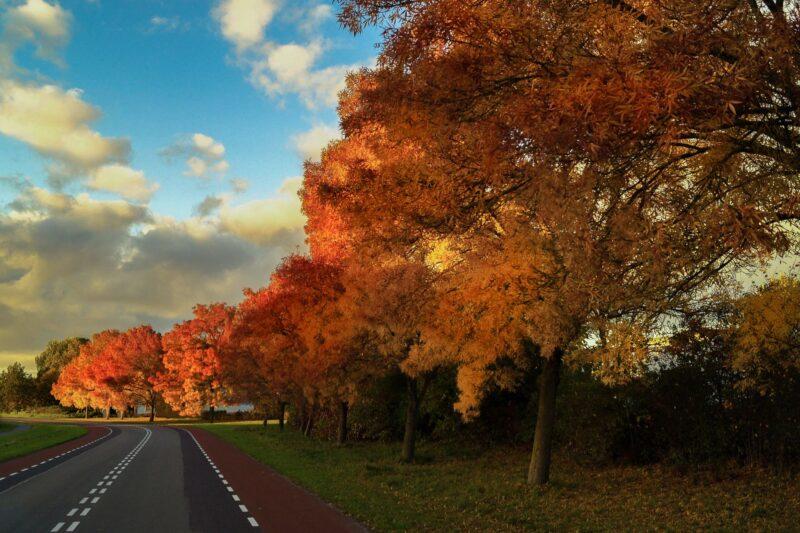 vanilla-autumn-street-trees