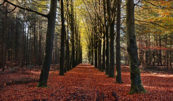 vanilla-autumn-trees